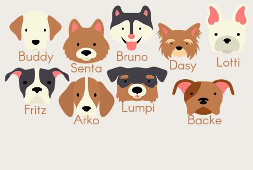 Hundenamen Datenbank